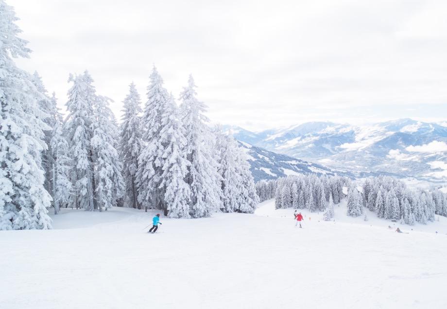 Skiing Trees Snow